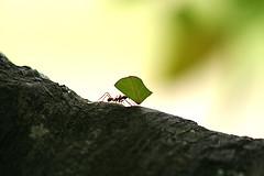 Ants_DavidDennisPhotos.com